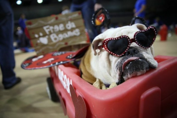 """A cachorra """"Linus the LoveBug,"""", de Rebecca Richardson, ganhou na categoria """"melhor roupa'. (Foto: Reprodução / Drake University)"""
