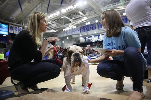 """Pudge foi resgatada na cidade de Memphis, no estado do Tennessee, e ganhou na categoria """"cão resgatado"""". (Foto: Reprodução / Drake University)"""