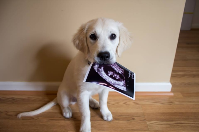 cachorro-anuncio-gravidez-03