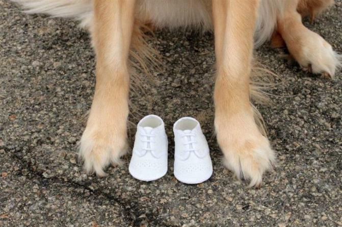 cachorro-anuncio-gravidez-04