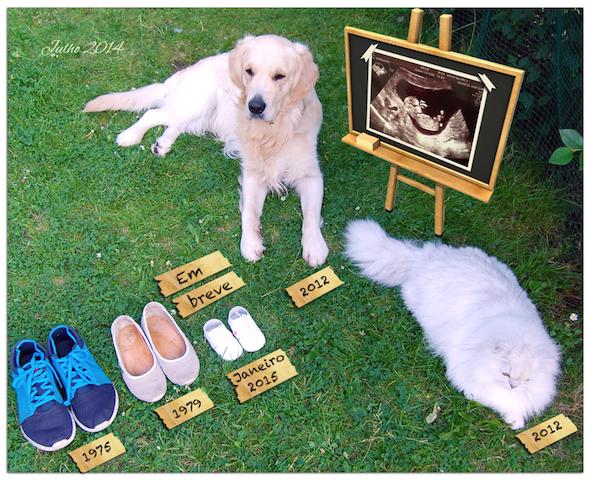 cachorro-anuncio-gravidez-08