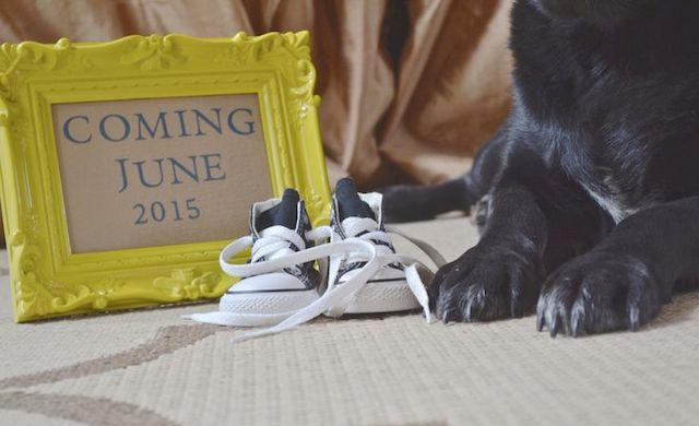 cachorro-anuncio-gravidez-11