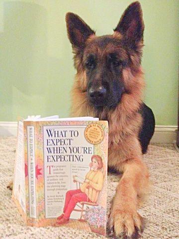 """Nome do livro em português: """"O que esperar quando você está esperando."""""""