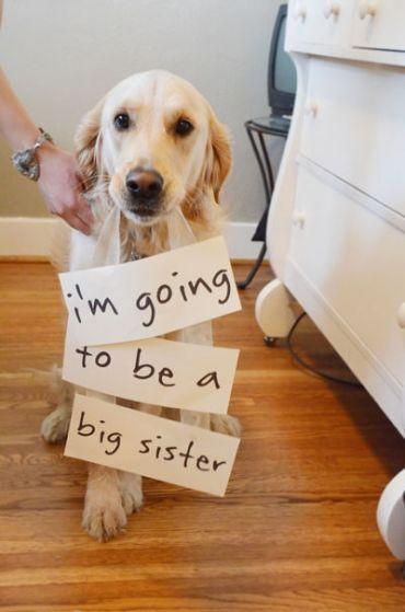 """Tradução: """"Eu vou ser a irmã mais velha."""""""