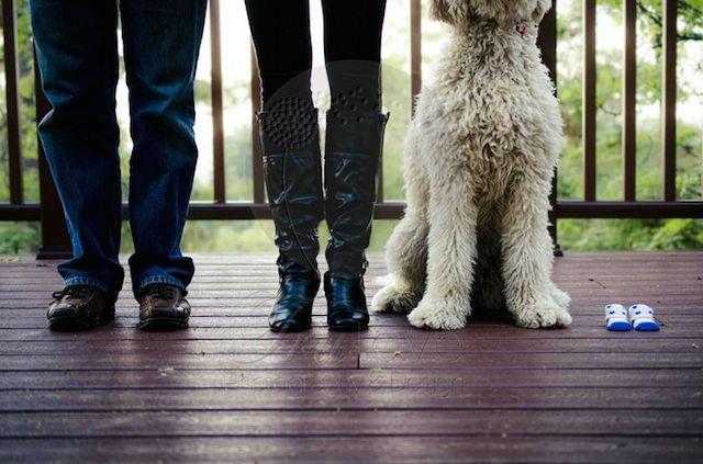 cachorro-anuncio-gravidez-17