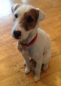 O cachorro Buddy está participando do estudo, ele gosta de girar em espaços pequenos. (Foto: Reprodução / Facebook)