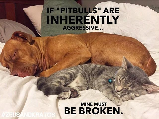 """Tradução: """"Se os Pit Bulls são naturalmente agressivos...o meu deve estar quebrado."""" (Foto: Reprodução / Facebook)"""