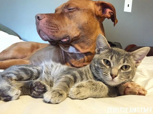 Quer algo melhor do que ter alguém pra te esquentar na hora da soneca? (Foto: Reprodução / Facebook)