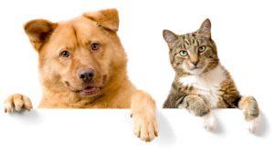 Punições mais severas para quem cometer crimes contra cães e gatos. (Foto: Reprodução / Google)