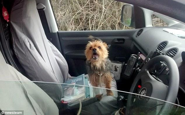 O cachorro Alfie conseguiu ajuda. (Foto: Reprodução / Daily Mail UK)