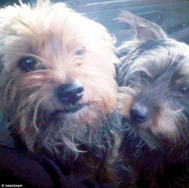 Alfie e Lillie juntos, antes do roubo.. (Foto: Reprodução / Daily Mail UK)