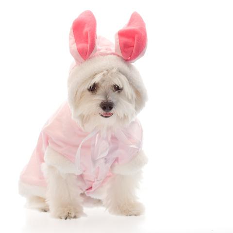 cachorro-fantasia-coelho-01