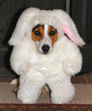 cachorro-fantasia-coelho-05