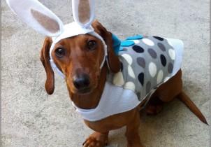 cachorro-fantasia-coelho-13