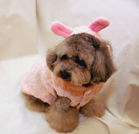 cachorro-fantasia-coelho-14