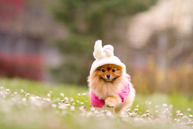 cachorro-fantasia-coelho-18