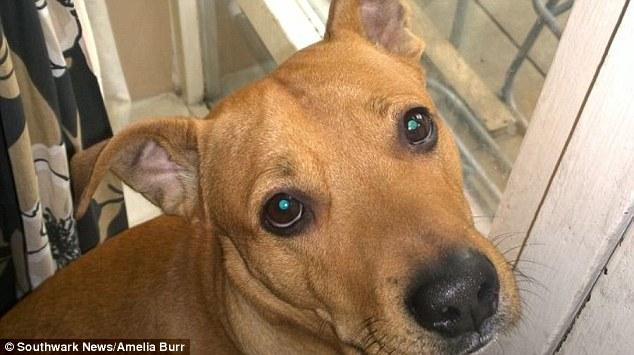 O cão Leo causou um acidente! (Foto: Reprodução / Daily Mail UK)