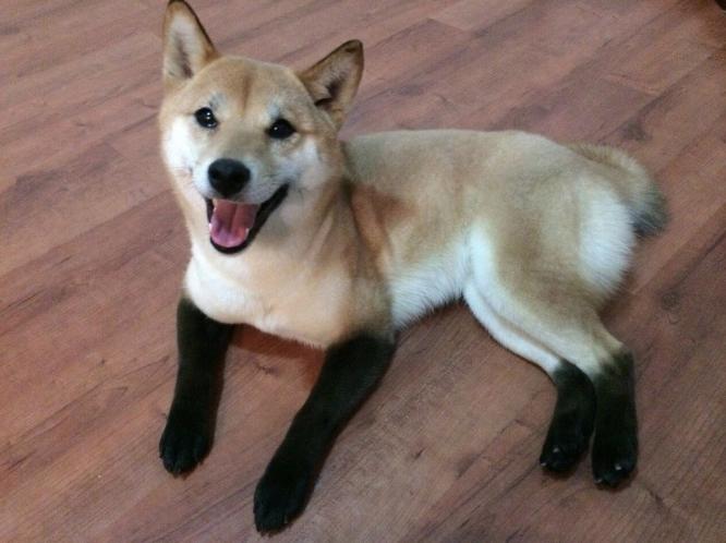 cachorro-marca-03