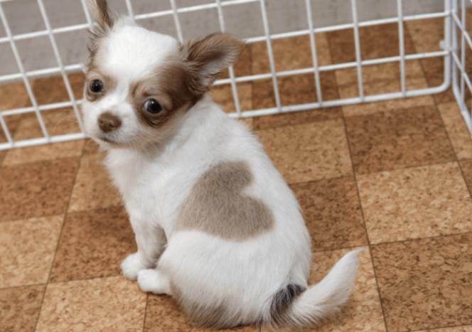 cachorro-marca-04