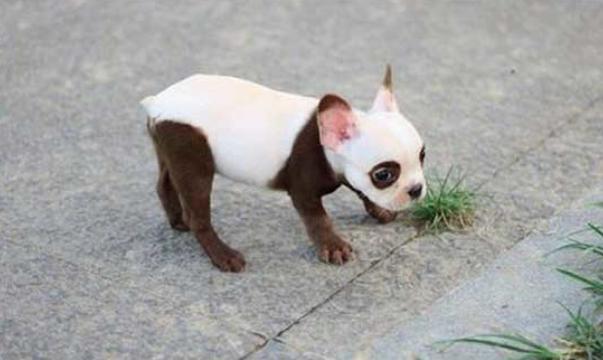cachorro-marca-10