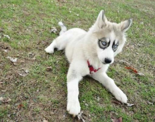 cachorro-marca-11
