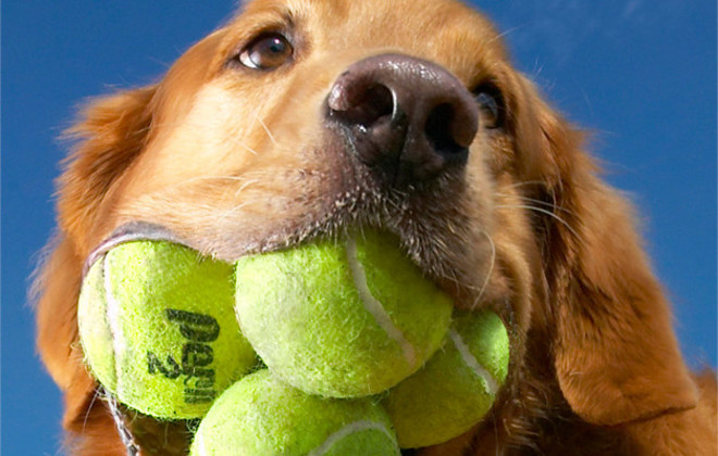 O cão Augie é um recordista mundial. (Foto: Reprodução / Guinness World Records)