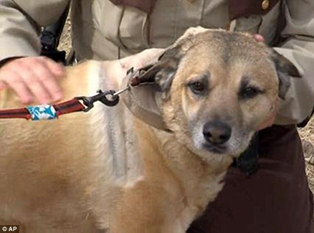 O cão foi resgatado e está se recuperando dos machucados. (Foto: Reprodução / Daily Mail UK)
