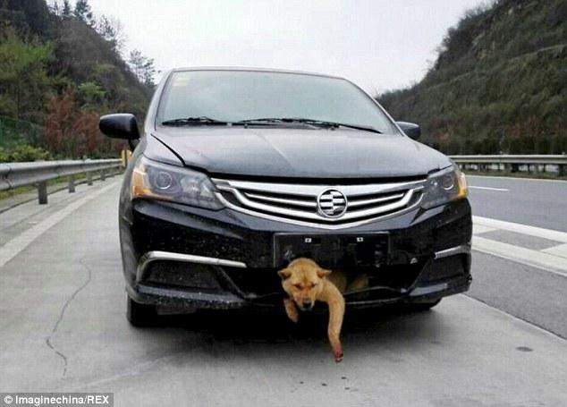 O cachorro é um sobrevivente. (Foto: Reprodução / Daily Mail UK)
