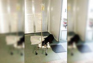 Momento que cachorro recebe tratamento em UPA. Foto: Arquivo pessoal