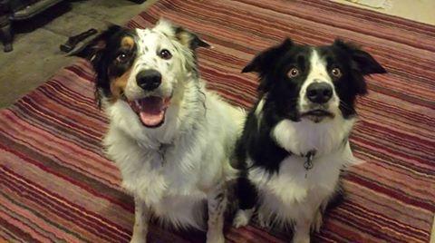 Dino (esquerda) costuma girar e Hughie, não. Os dois estão participando do estudo. (Foto: Reprodução / Facebook)