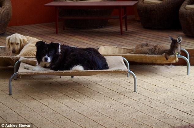 Os três dormem em caminhas de cachorro. (Foto: Reprodução / Daily Mail UK)