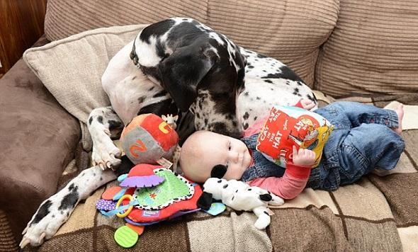 Dog alemão com bebê. (Foto: Reprodução / Daily Mail UK)