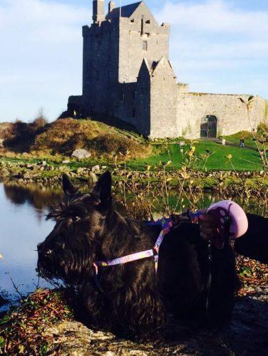 Tekila, em Dublin. Foto: Reprodução/Facebook