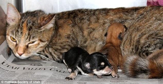 Kit amamentando os cachorrinhos. (Foto: Reprodução / Daily Mail UK)