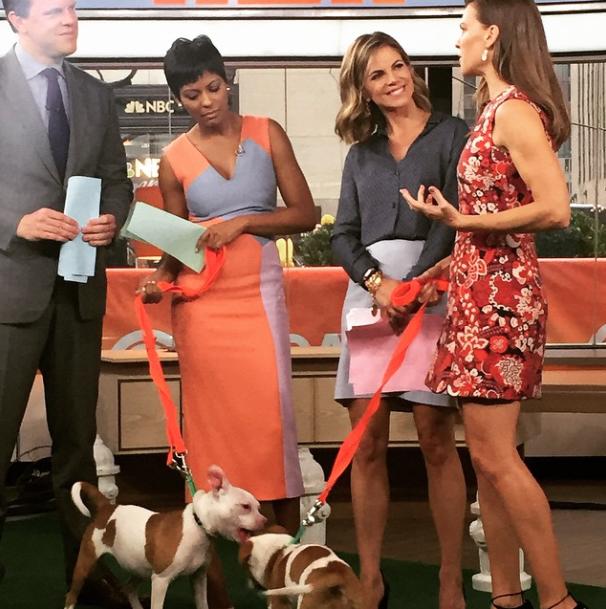 Hilary Swank com os cães que precisam de um lar. (Foto: Reprodução / Instagram)
