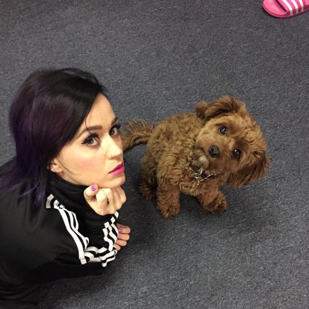 Katy Perry com seu cachorro Butters. (Foto: Reprodução / Instagram)