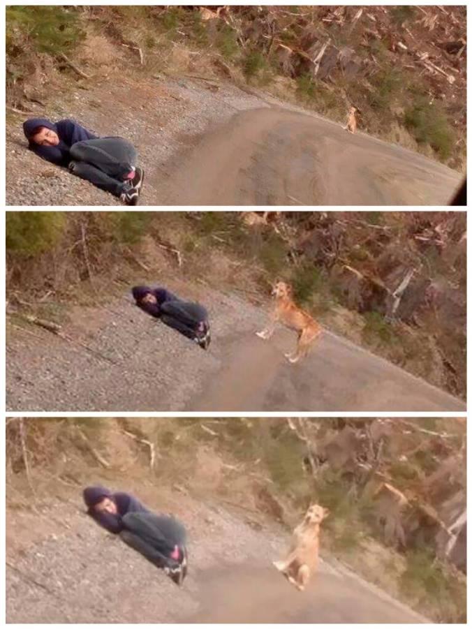 Amanda se fingindo de morta para chamar a atenção do cão. (Foto: Reprodução / Lost and Found Pets WA State)
