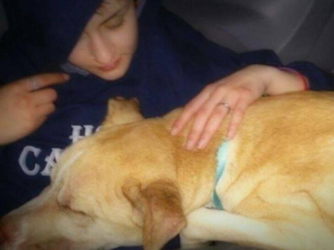 Indo ao veterinário. (Foto: Reprodução / Lost and Found Pets WA State)