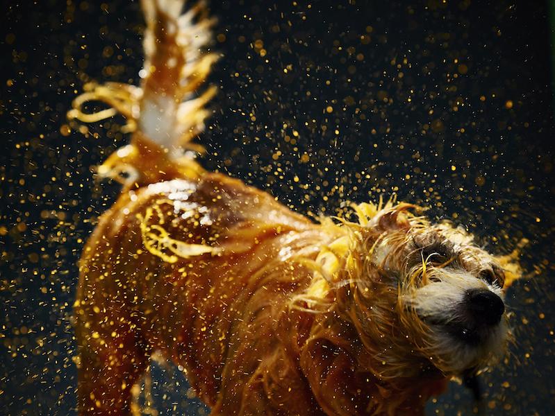 O artista canino pintando suas telas. (Foto: Divulgação)