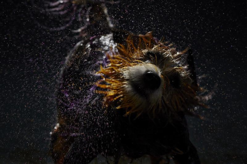 Cão deixando sua marca registrada. (Foto: Divulgação)