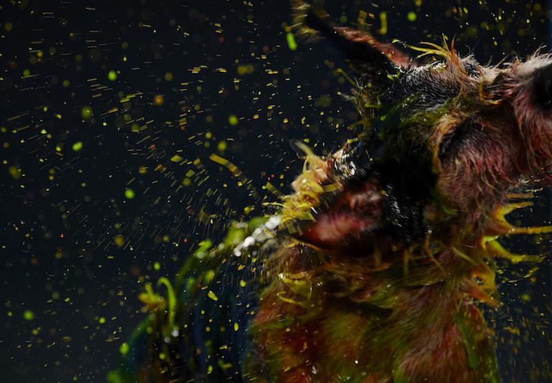 A famosa chacoalhada canina. (Foto: Divulgação)