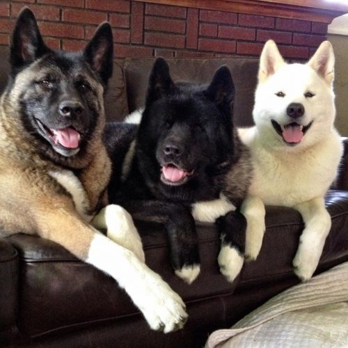 A cachorra Kiaya recebe a ajuda de seus irmão mais novos, Cass e Keller. (Foto: Reprodução / Facebook / Jessica VanHusen)