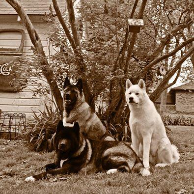 A generosidade dos cães surpreende.  (Foto: Reprodução / Facebook / Jessica VanHusen)