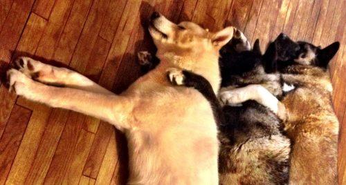 Até dormem juntos.  (Foto: Reprodução / Facebook / Jessica VanHusen)