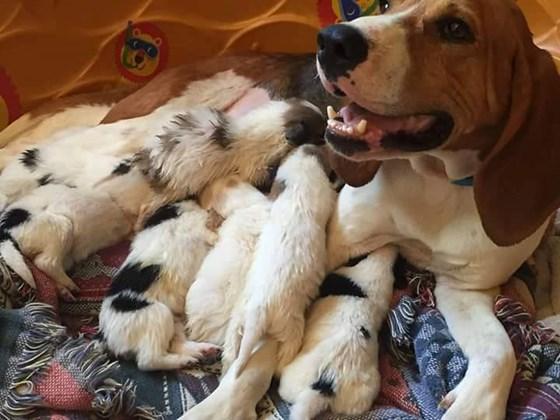 A cachorra Honey é mesmo uma mãezona. (Foto: Reprodução / Bluegrass Senior Dog Rescue)