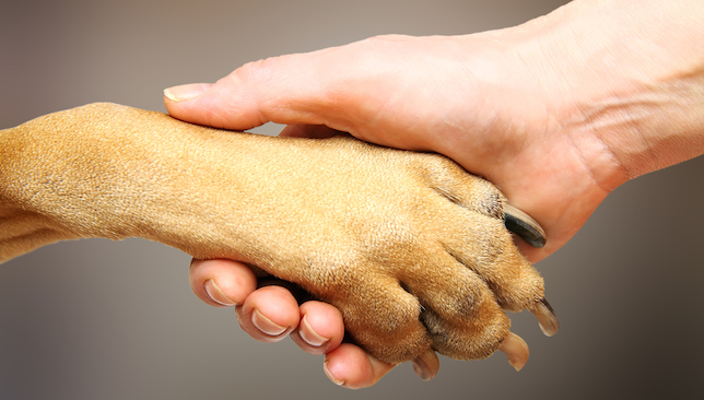 Dog Shaking Hands With Puppy Between His Feet