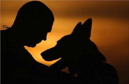 O cão é considerado o melhor amigo do homem. (Foto: Reprodução / Google)