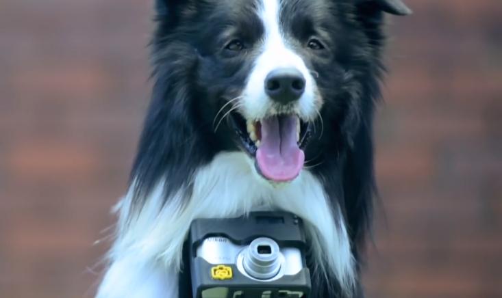Com o Heartography, os cães vão fotografar tudo que gostam. (Foto: Reprodução / Youtube / Nikon Asia)