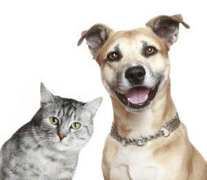 É importante diagnosticar a diabetes em cães e gatos. (Foto: Reprodução / Google)