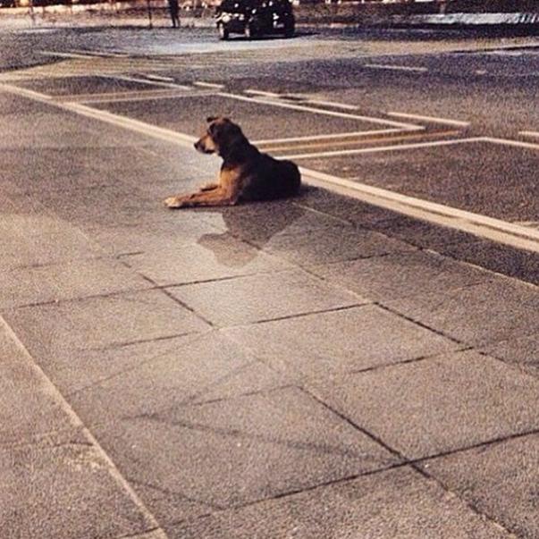 Primeira foto divulgada sobre o cão no Aeroporto Internacional de Guarulhos, em São Paulo. (Foto: Reprodução / Instagram)